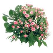 Μπουκέτο με μίνι ροζ τριαντάφυλλα