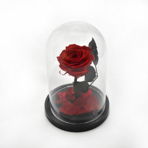 Red Beauty and the beast rose