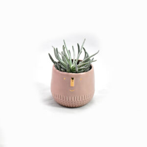 Mini Succulent Face pot